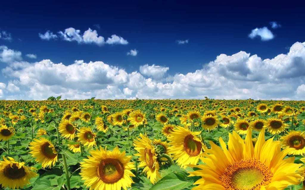 Homeopathie tijdens de zomervakantie