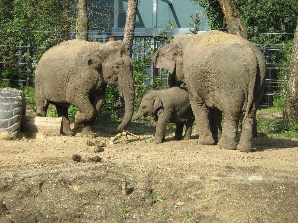 Hooikoorts in de dierentuin