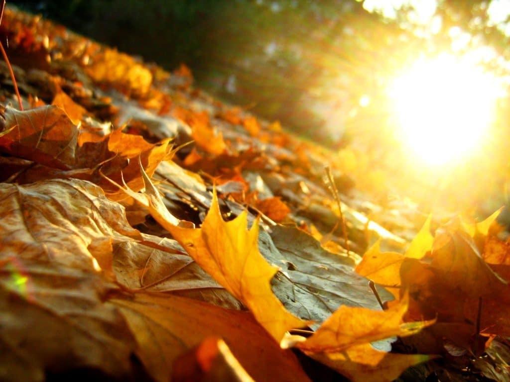 Homeopathie in de herfst