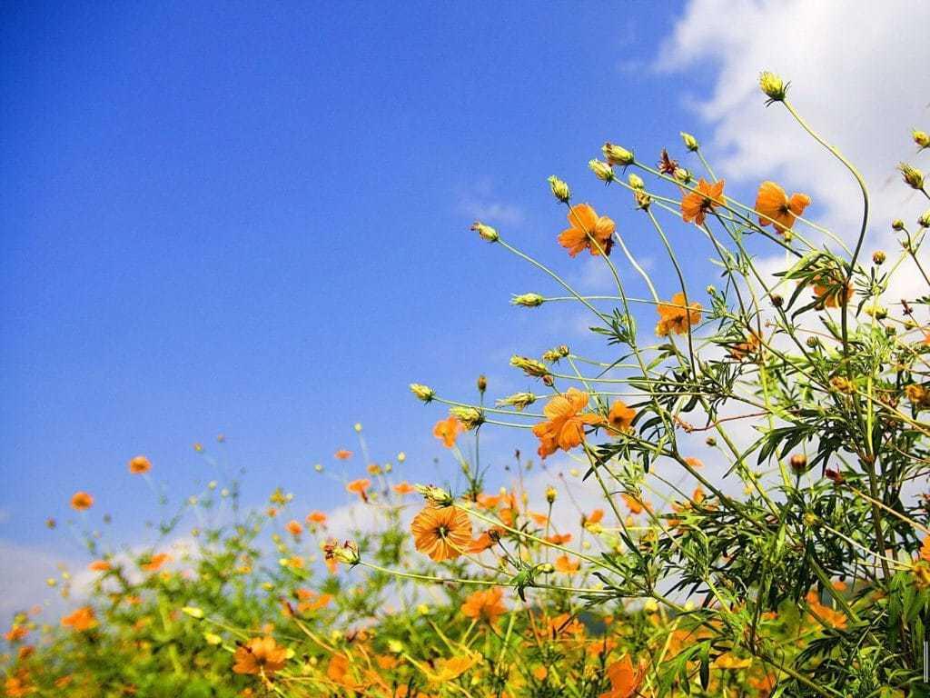 Homeopathie in de lente