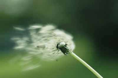 Allergieën en homeopathie