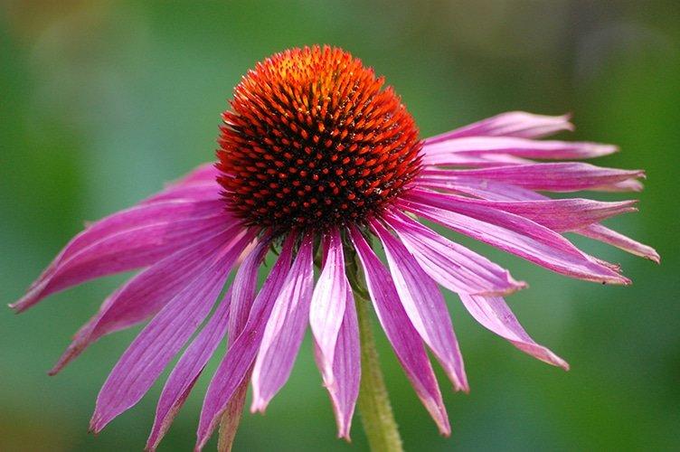 Homeopathie als preventie