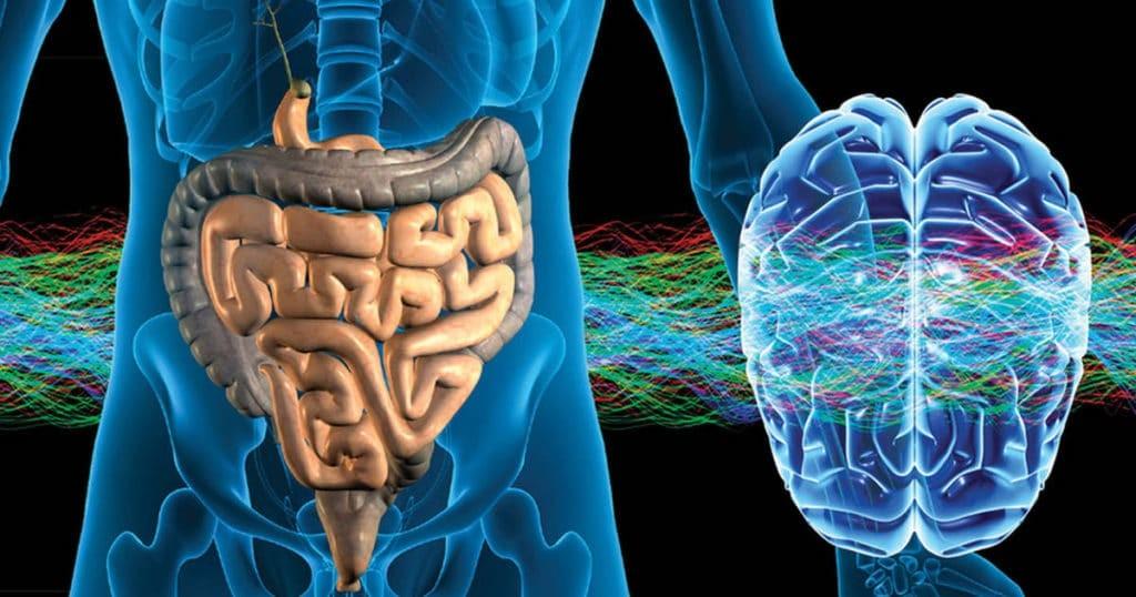 De darmen, onze tweede hersenen
