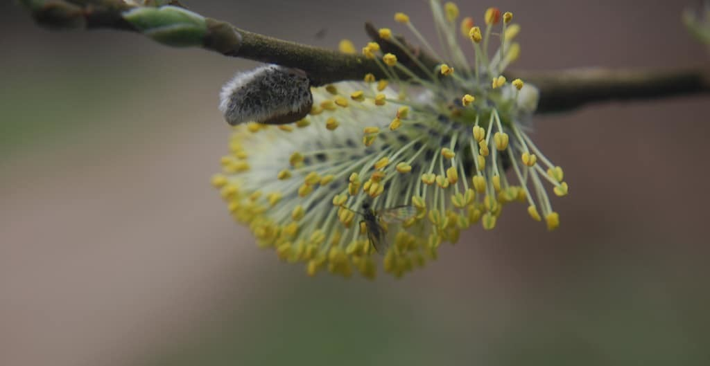 Wij en Libelle: Lentekriebels, hooikoorts