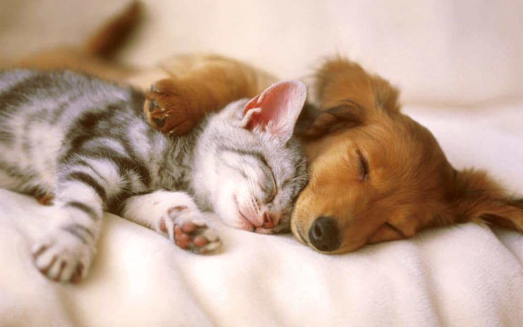 Werelddierendag en homeopathie