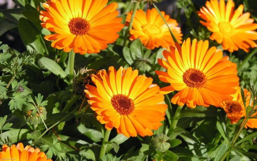Groeiende vraag naar homeopathische producten