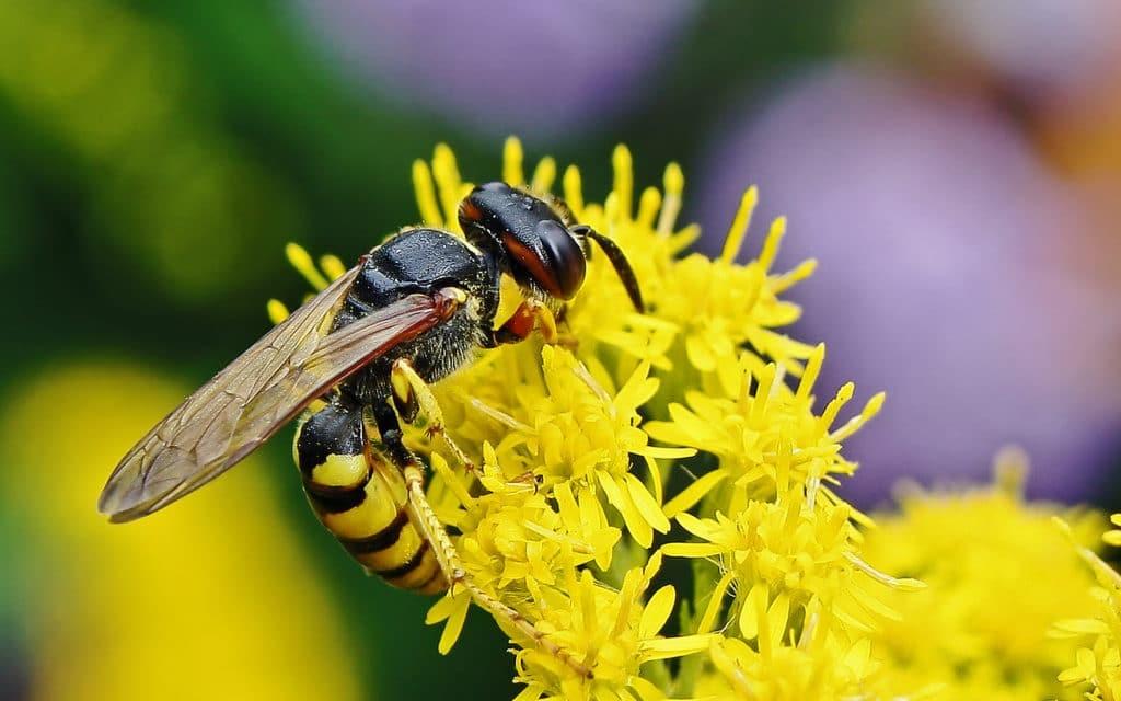 Geprikt door een wesp