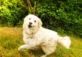 Een hond die veel last had van teken